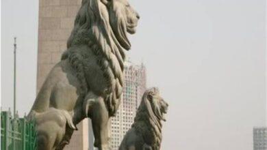 صورة بالصور سعرهم   15 ألف جنيه ..كيف انتقلت أسود  قصر النيل لمنطقة حدائق اكتوبر  ودهشور ؟